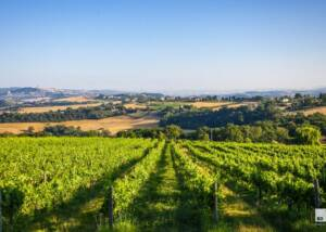 Cantina Todini Vineyards
