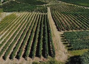 Vineyards of Jako Wine
