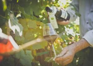 Wine Tasting at Le Carline