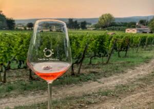 A Glass of Wine in The Vineyards of Tenuta La Macchia