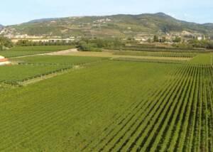 Vineyards of Tenuta Vignega Stretching
