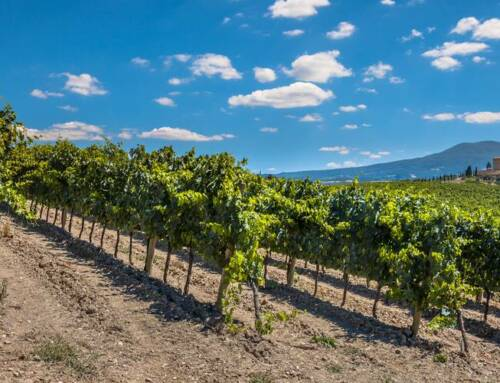 Your 2021 Guide to the Best Wineries in Chianti
