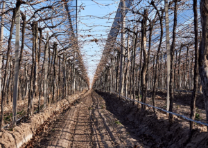 Andeluz Organic Vineyards