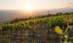Vineyards of Azienda Agricola Serracavallo