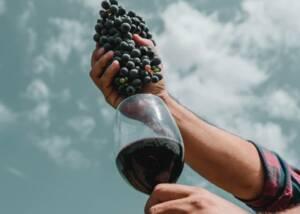 Black Grapes of Bodega Donozo Berlanga and a Glass of Wine