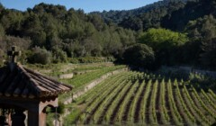 Bodega Son Vich De Superna Vineyards