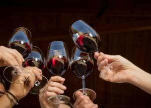 Wine Tasting Group of Bodega Son Vich De Superna