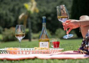 Wine Tasting at Domaine De La Navicelle