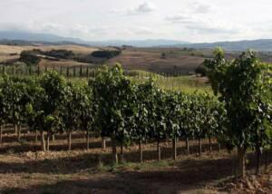 Vineyards of Innocenti Soc Agr.