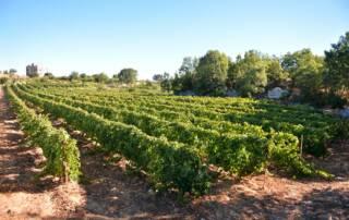 Vineyards at Karam Wines