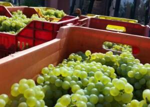 Harvest of Leo Vanin