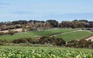 Beautiful Vineyards of Montalto