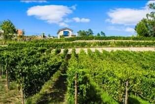 The Bargiela Bienati Winery Vineyards