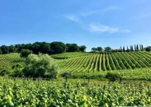 Vineyards of Valdonica Winery I Residence I Restaurant
