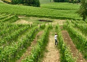 Valdonica Winery I Residence I Restaurant Vineyards