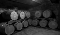Cellars of Vinyes Dels Aspres