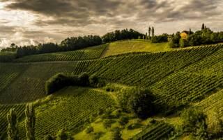 Vineyards of Wein & Sektmanufaktur Harkamp